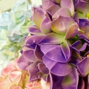 Maraton kwiatowy - Hortensja. Fotorelacja z warsztatów.