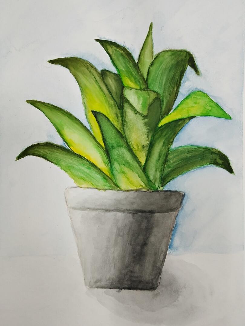 Praca ucznia. Ilustracja akwarelowa Kaktus II